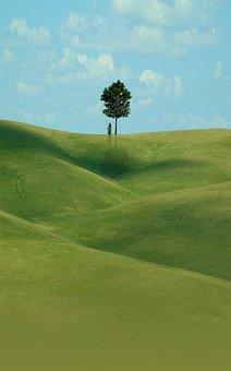 Download, Wallpaper, Tree, Grass, Sky, Village