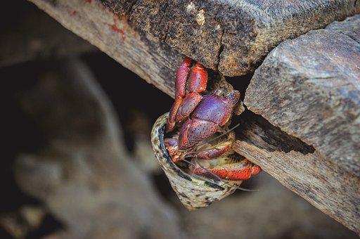 Nature, Animal World, Animal, Wood, Close, Cuba, Crab