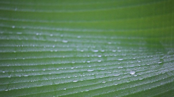 Dew, Autumn Leaves, Dew Drops, Nature, Drops Of Water