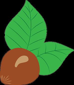 Hazelnut, Vector, Drawing, Fruit, Nut, Brown, Chestnut