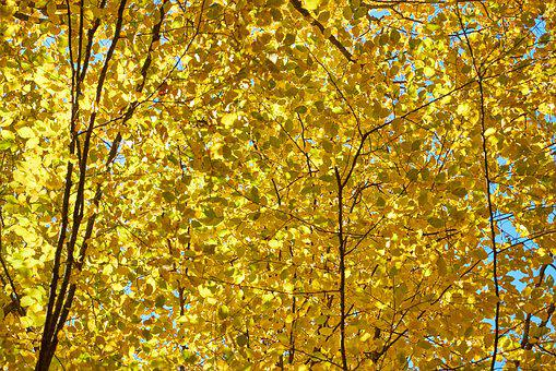 Tree, Leaves, Branch, Plant, Nature, Autumn, Peace