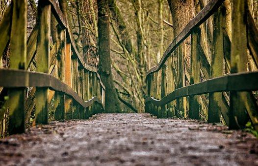 Bridge, Web, Wood, Railing, Forest, Hiking, Old