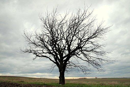 Tree, Field, Lone Tree, Branches, Konary, Empty
