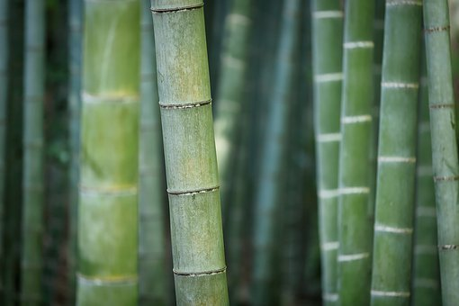 Bamboo, Green, Nature, Plant, Forest, Exotic, Reed