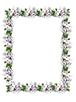 Frame, Border, Daphne, Floral