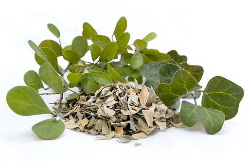 Leaf, Flora, Herb, Herbal, Food