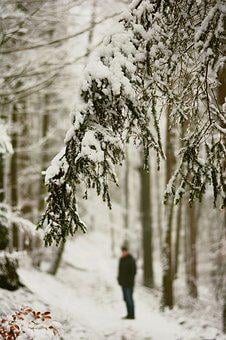 Winter, Snow, Snowy, Forest Path, Wintry, Winter Forest