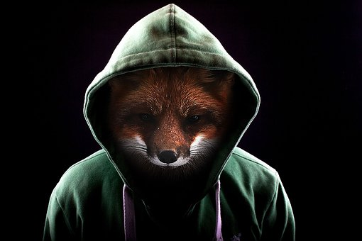 Fox, Roux, Animal, Hoodie, Photo Editing, Dark