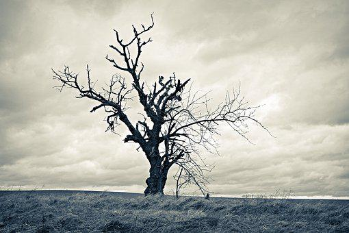 Tree, Dried, Lonely, Loneliness, Gloomily, Romantic