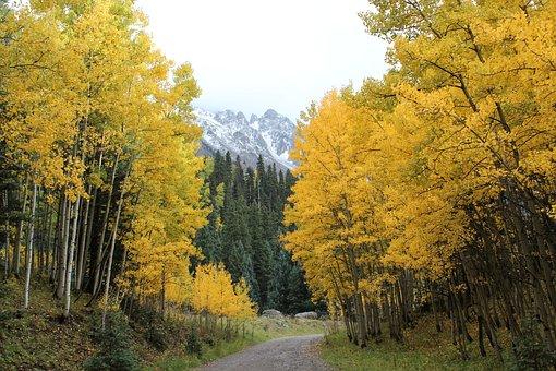 Green, Aspens, Trees, Rocky Mountains, Landscape