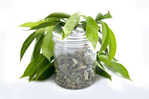Leaf, Flora, Herbal, Herb, Healthy