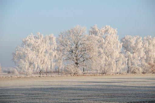 Winter, Hoarfrost, Cold, Frozen, Frost, Wintry, Trees