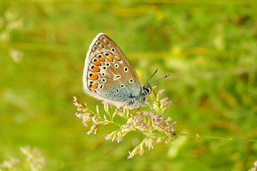 Animal, Insect, Butterfly, Butterflies