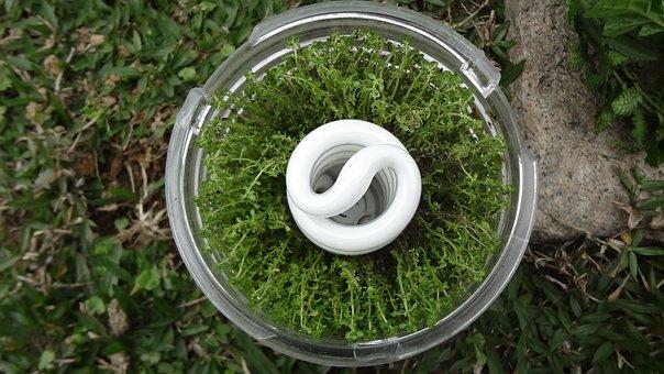 燈, Glass, Economizer, Light Bulb, Light, Grass, Plant
