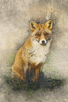 Fox, Wildlife, Nature, Animal, Mammal, Natural, Red Fox