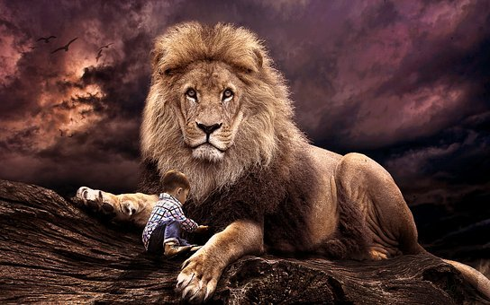 Mammal, Wildlife, Lion, Cat, Animal, Wild, Nature