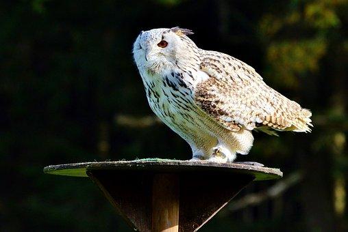 Animal, Nature, Barn Owl, Owl, Raptor, Bird, Plumage