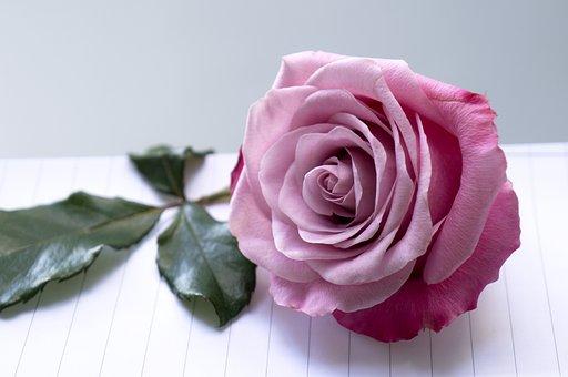 Emotion, Roses, Pink Purple, Scrapbooking Page