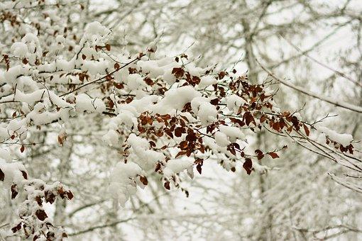 Winter, Snow, Snowy, Branch, Tree, Winter Mood, Wintry