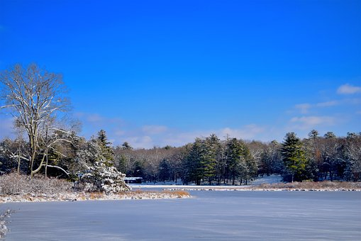 Lake, Winter, Snow, Trees, Park, Cold, Season, Nature