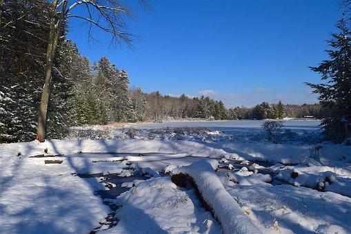 Snow, Lake, Coast, Trees, Landscape, Nature, Water