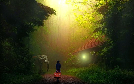 Girl, Alone, Jungle, Walking, Elephant, Winter, Light