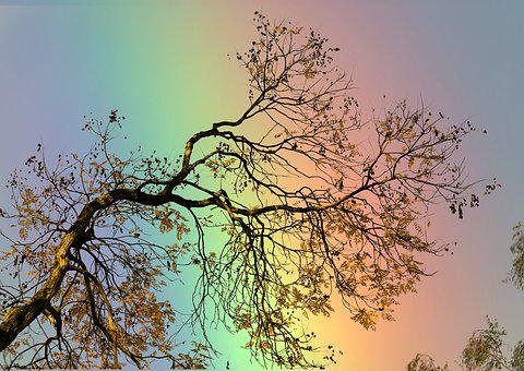 Rainbow, Branch, Boxer Shorts