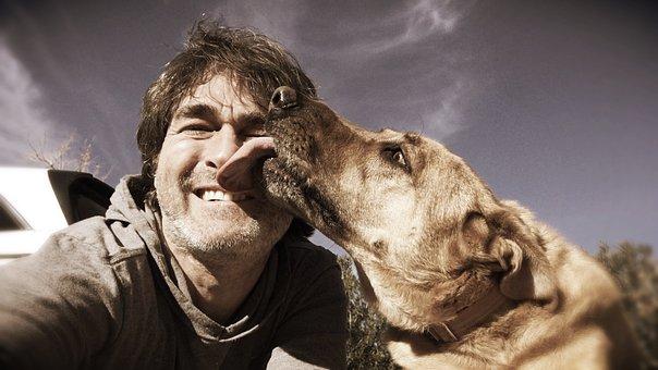 Chinook Dog, Dog, Lick, Canine, Chinook, Breed