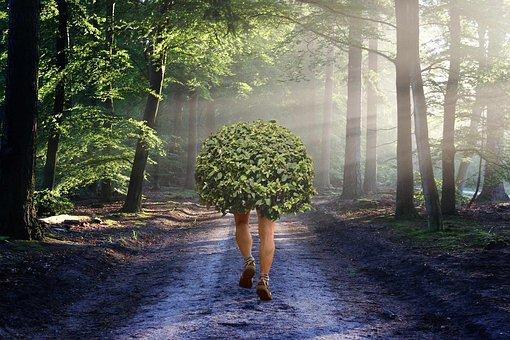 Road, Forest, Sport, Walk, Trees, Bush, Race