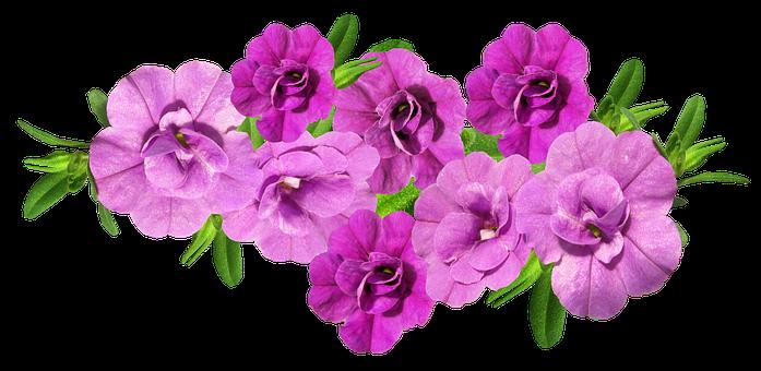 Flowers, Mauve, Arranged, Cut Out