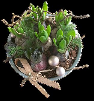 Hyacinths, Decoration, Flowers, Plants, Christmas