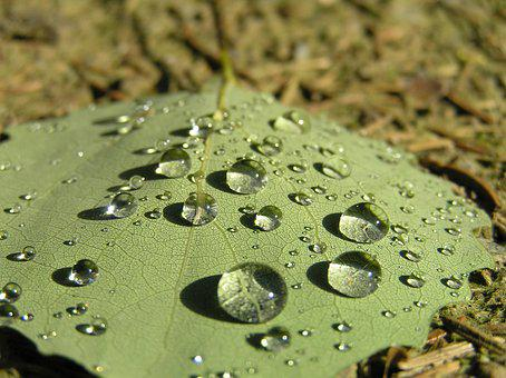 Drops, Sheet, Drop, Macro, Dew, Nature, Water, Raindrop