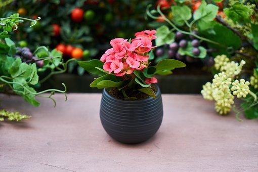 Pink, Flower, Flowerpot, Nature, Live, Oxygen