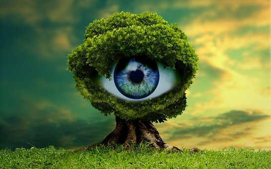 Nature, Lawn, Vista, Outdoors, Beautiful, Tree, Field