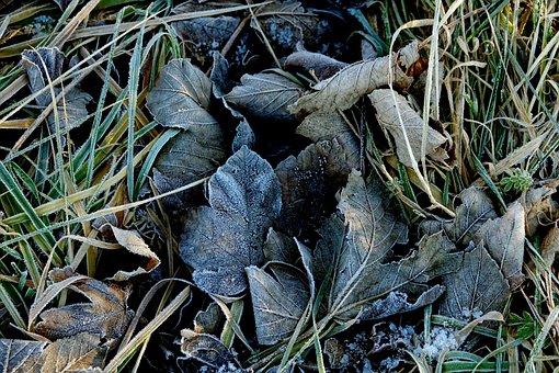 Frost, Hoarfrost, Leaves, Winter, Cold, Ripe, Frozen