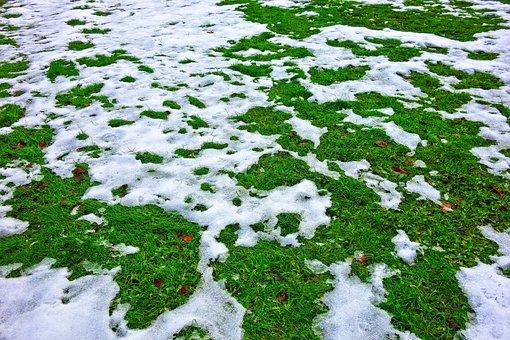 Snow, Melting Snow, Winter, Snow On Grass, Melting