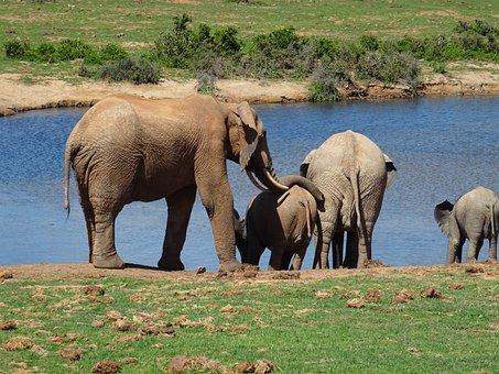 Elephant, Animal World, Mammal, Nature, Animal, Waters