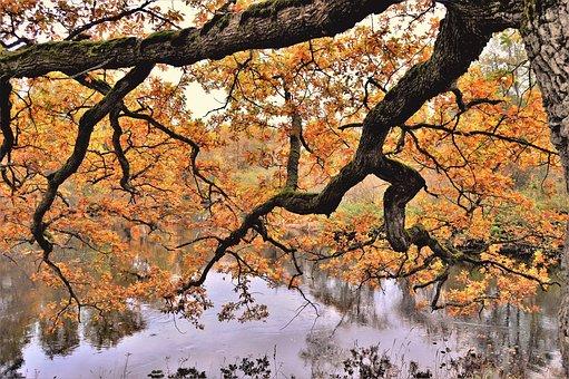 Tree, Autumn, Nature, Branch, Season, Park, Outdoor