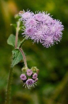 Flora, Nature, Flower, Season, Closeup, Wild, Garden