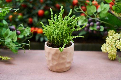 Flower, Flowerpot, Nature, Live, Oxygen, Chlorophyll