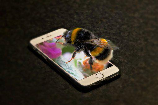 Phone, Bourdon, Insect, Macro, Forage, Portable