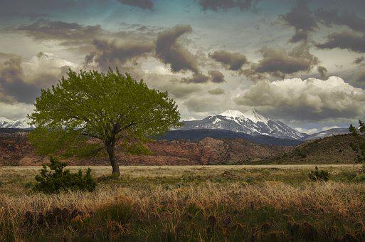 Landscape, Nature, Tree, Sky, Grass, Outdoors, Travel