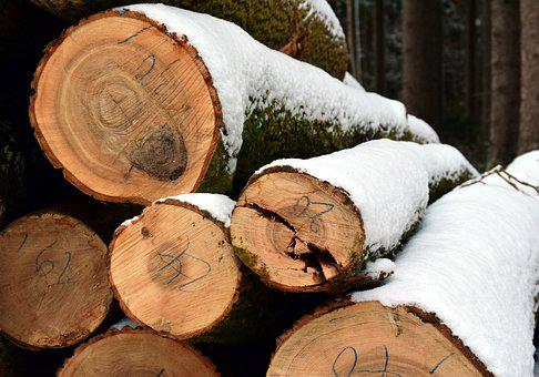 Tree Trunks, Winter, Snow, Forest, Trees, Wood, Cold