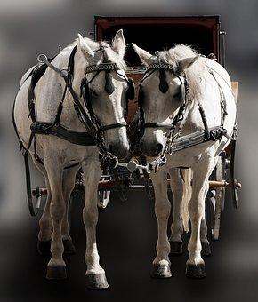 Traffic, Transport, Coach, Horse, Tableware, Fiaker