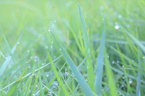 Green, Droplets, Color, Vietnam, The Morning, Dew Drops