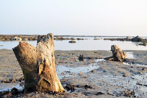 Coral, Sea, Beach, Evening, Tree, Island, Nature