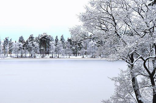 Winter, Snow, Cold, Frost, Frozen, Ice, Tree, Nature