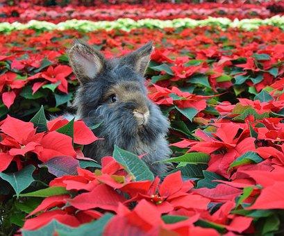 Flower, Nature, Animal, Beard Rabbit, Rabbit Christmas