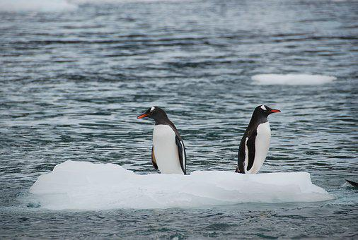 Antarctic, Animal Life, Wildlife, Polar, Cold, Ice