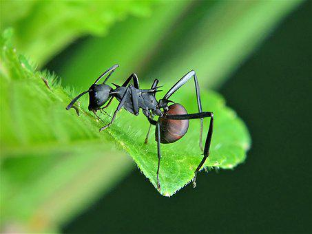 Ant, Ants, Insect, Nature, Wildlife, Invertebrate